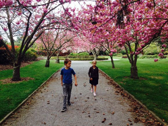 Spring at the Ashburton Domain